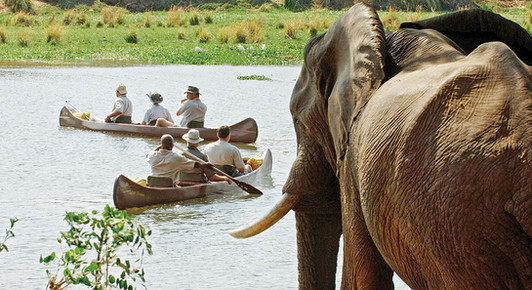 Canoe safaris offering close encounters with wildlife on the river channels