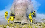 dugong-close-up.jpg