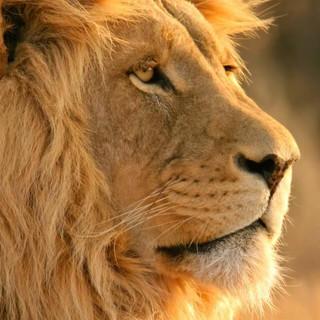 Kruger National Park Concessions