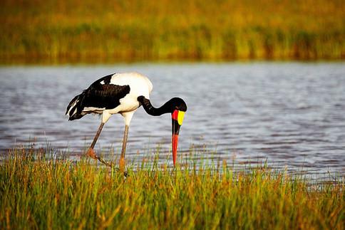 Birdwatching in the Sinet Delta - home to more than 300 bird species