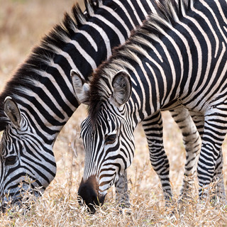 Experience some of the most prolific game viewings in Majete Wildlife Reserve