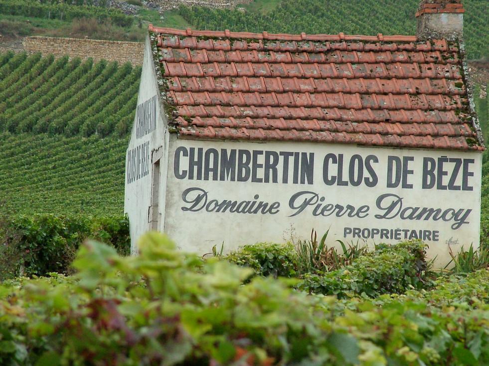 Chambertin_Clos_de_beze_Domaine_Pierre_Damoy_vineyard.jpg