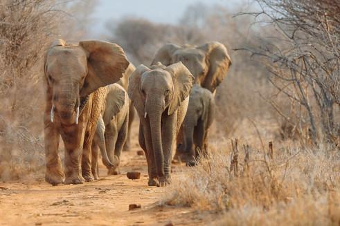 An ideal combination with Botswana's Okavango Delta
