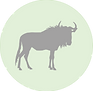 wildbeest icon.png