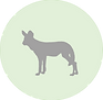 African Wild dog icon.png