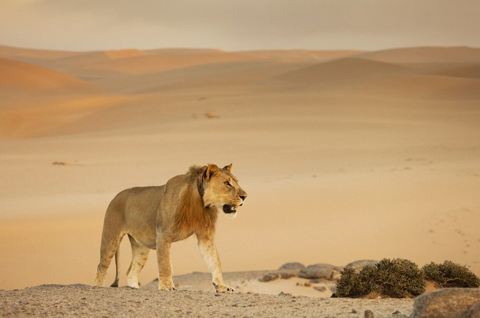 Witness the incredible desert-adapted wildlife