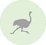 Ostrich icon.png