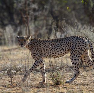 Namunyak Wildlife Conservancy