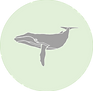 Humpback whale icon.png