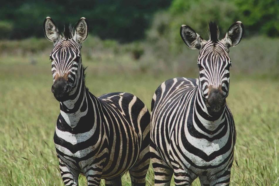 Good value safari destination in an exclusivity