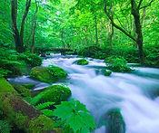Oirase Stream spring.jpg