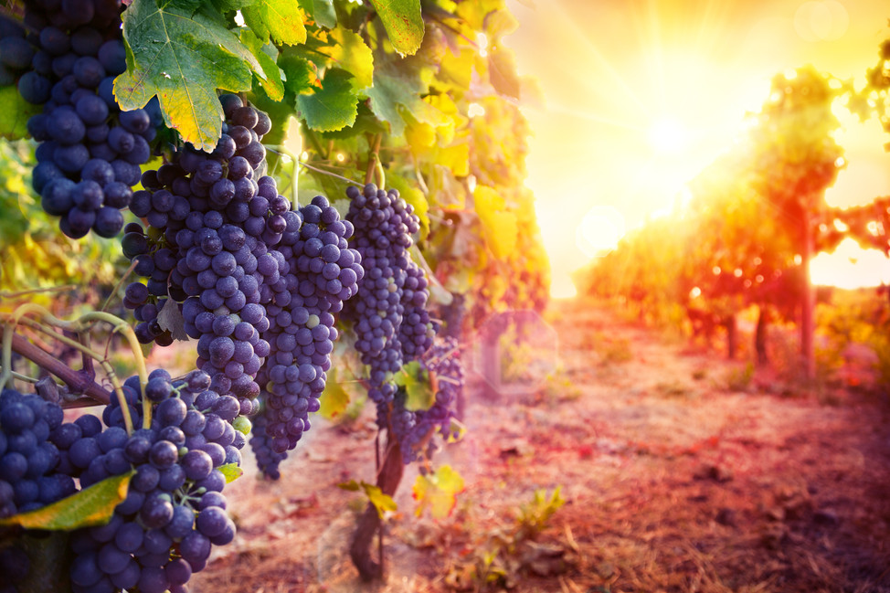 Sample some of the most revered wines in the world
