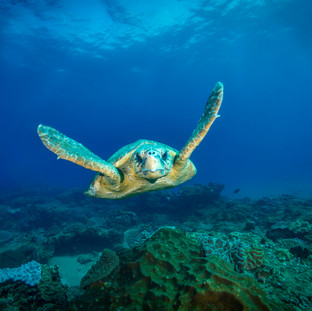 Dive & learn about the Oceans Without Borders project