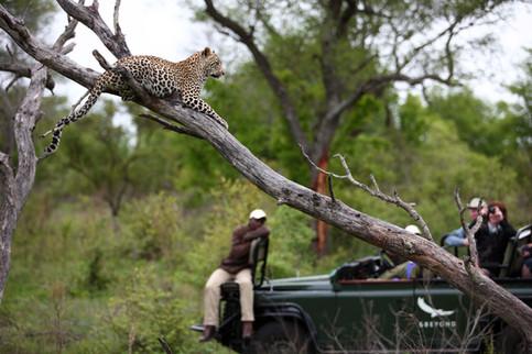 Open vehicle safari day and night