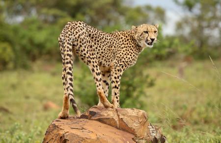 Big cat territory in AndBeyond Phinda Private Game Reserve