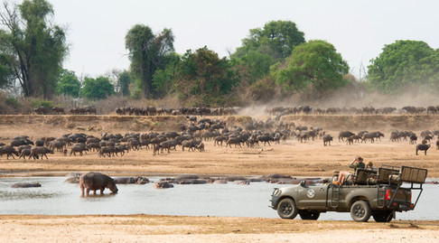Great value safari destination with prolific game viewing away from the crowds