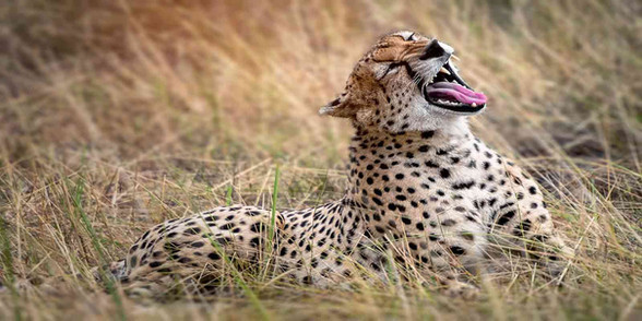 Predator paradise including one of the largest cheetah populations in Africa