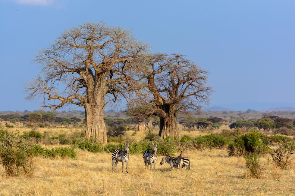 Breathtaking vistas and baobab dominated landscapes