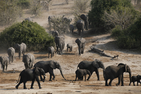 High concentration of elephants