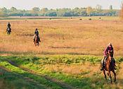 Homoki-Lodge-Horse-Riding19.jpg