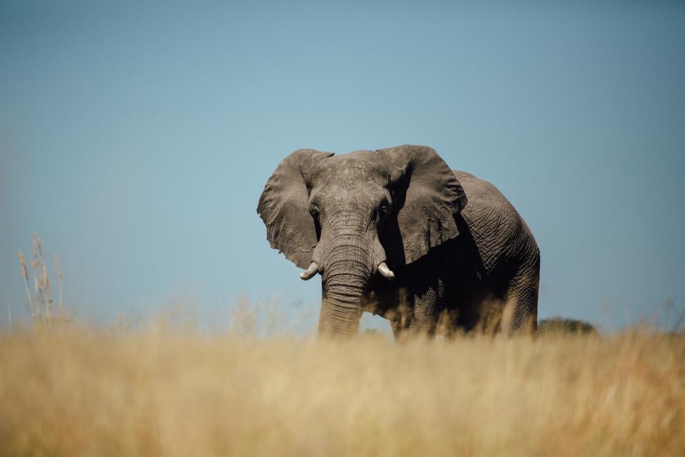 Domain of Elephants