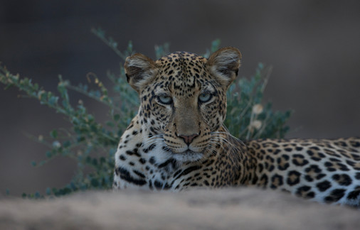 Big Five destination away from the crowds