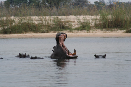Safari journey on the Chobe River that combines excellent with an adventure of the Victoria Falls & the Zambezi