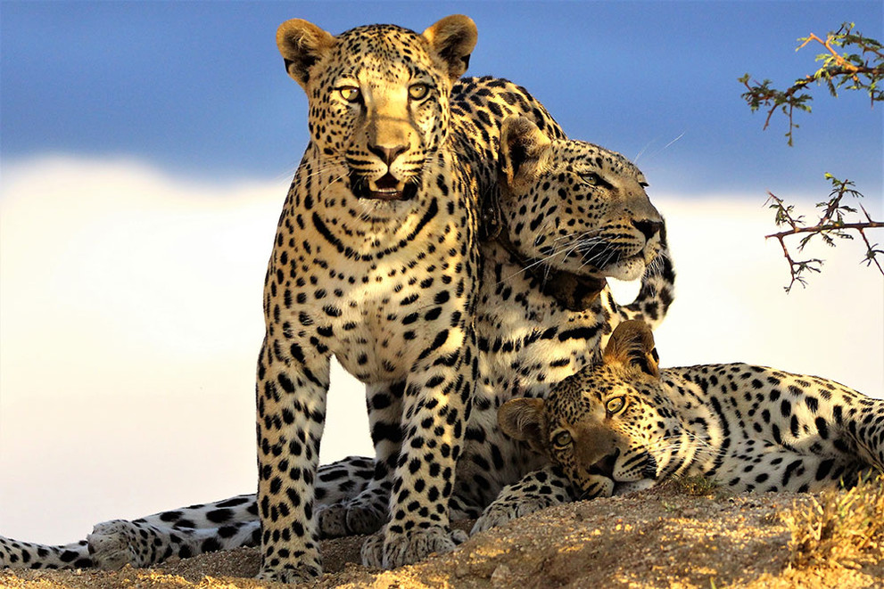 Home to a healthy population of leopards