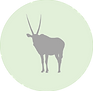 Oryx icon.png
