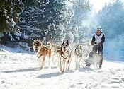 saami-village-husky.jpg
