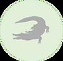 Crocodile icon.png