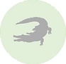 Crocodile icon.png