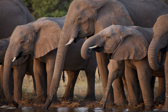 One of the largest Elephant population in Africa