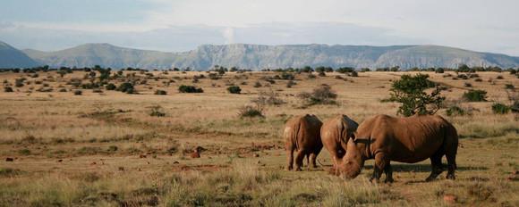 Abundance of arid landscape-adapted wildlife