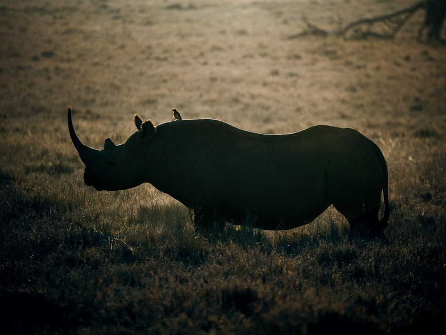 Home to some of the largest population of black rhinos