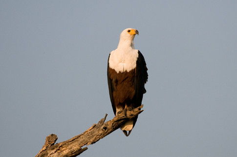 An abundance of bird of preys offering a spectacular bird-viewing experience