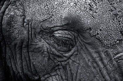 A preferred natural elephant sanctuary