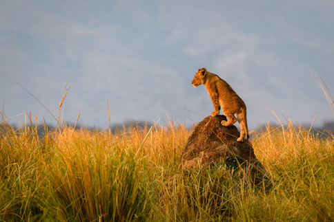 Home to four of the Big Five in the UNESCO World Heritage site