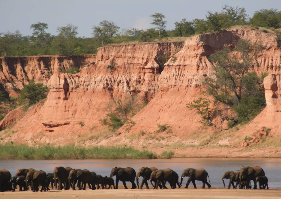 One of the largest populations of elephants in Africa