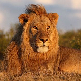 Witness the Big 5 in Akagera National Park
