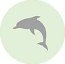 Dolphin icon.png