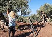 Son Moragues Olive Estate.jpg