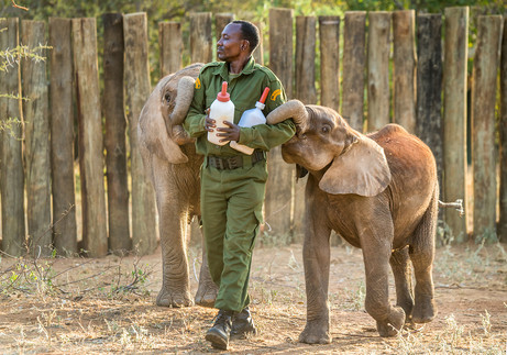 Gain insights into the Reteti Elephant Sanctuary