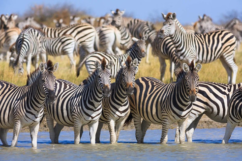 Africa's Largest Mammal Migration