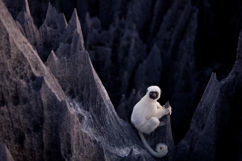 Encounter the unique wildlife that calls the Tsingy de Bemaraha home
