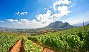 02SW26-IM0202-winelands-safari-1475.jpg