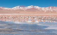 bolivia-laguna-colorada.jpg