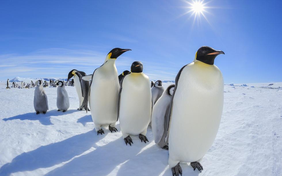 Antarctica-20.jpg