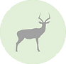 springbok icon.png