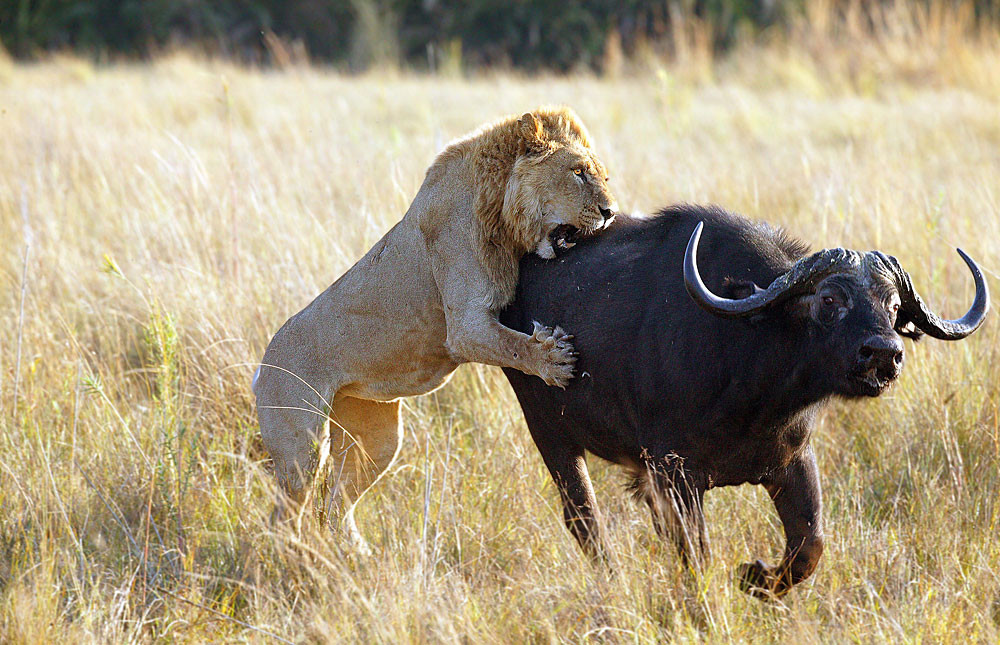 Prolific game viewing at the pinnacle of safari adventures